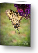 Swallow Tail Butterfly Greeting Cards - Hanging On Greeting Card by Darren Fisher