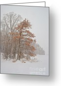Winter Storm Photo Greeting Cards - Hanging On Greeting Card by Pamela Baker