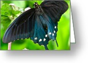 Designer Butterfly Works Photo Greeting Cards - Hanging Out With The Flowers Greeting Card by Debra     Vatalaro