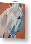 Andalusian Horse Greeting Cards - Hannocka Greeting Card by Anne West