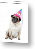 Female Animal Greeting Cards - Happy Birthday Greeting Card by Mlorenzphotography