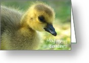 Canada Goose Greeting Cards - Happy Easter Gosling Greeting Card by Sharon  Talson