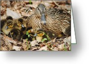 Protective Mother Greeting Cards - Happy Family Greeting Card by Robert Harmon