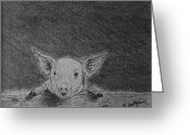 Livestock Drawings Greeting Cards - Happy Pig Greeting Card by Jason Sotzen