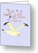 Seabirds Digital Art Greeting Cards - Happy Seagulls Greeting Card by Fred Jinkins