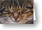 Cat Eyes Greeting Cards - Happy Sleep Greeting Card by Annfrau