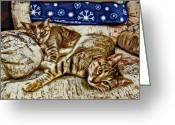 Kittens Digital Art Greeting Cards - Happy Together Greeting Card by David G Paul