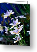 Blue Petals Greeting Cards - Happy Wild Iris Greeting Card by Kaye Menner