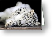 Black Leopard Greeting Cards - Hara...Snow Leopard Cub Greeting Card by Stephie Butler