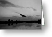Blue Heron Photo Greeting Cards - Harbor Flight Greeting Card by Skip Willits
