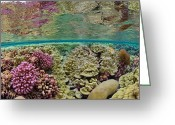 Oceans And Seas Greeting Cards - Hard Coral Carpets A Shallow Seafloor Greeting Card by Brian J. Skerry