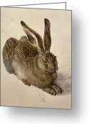 Watercolor On Paper Greeting Cards - Hare Greeting Card by Albrecht Durer