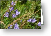 Mark Lehar Greeting Cards - Harebells II Greeting Card by Mark Lehar