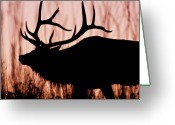 Montana Greeting Cards - Harem Bull In Sunset Greeting Card by Katie LaSalle-Lowery
