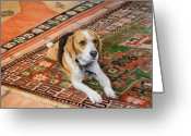Beagle Greeting Cards - Harley Greeting Card by Debra Jones
