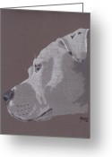 Pit Bull Greeting Cards - Harlo Greeting Card by Stacey Jasmin