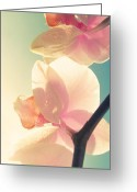 Oriental Flower Greeting Cards - Harmony Greeting Card by Amy Tyler