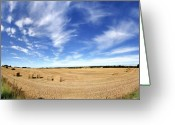 Fyn Greeting Cards - Harvest Time Greeting Card by Robert Lacy