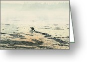 Maine Painting Greeting Cards - Harvesting the Flats Greeting Card by Brent Ander