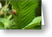 Harvestmen Greeting Cards - Harvestman Greeting Card by Jouko Lehto