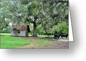 Live Oak Trees Greeting Cards - Havana Steers Greeting Card by Jan Amiss Photography