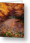 Forrest  Greeting Cards - Have a little Faith Greeting Card by Photodream Art