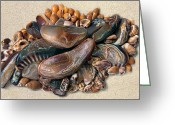 Shells Mixed Media Greeting Cards - Hawaii Opus 04 Greeting Card by Carol Zee