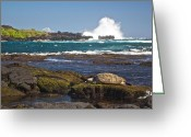 Hawai Greeting Cards - Hawaiian Green Sea Turtle  Greeting Card by James Walsh