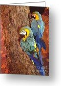 Colorful Birds Photo Greeting Cards - Hawaiian Parrots Greeting Card by Cheryl Young