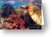 Reefs Greeting Cards - Hawaiian Sea Turtle - on the Reef Greeting Card by Bette Phelan