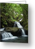 Tropical Gardens Greeting Cards - Hawaiis Onomea Falls - Big Island Greeting Card by Daniel Hagerman