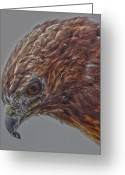Power Lines Greeting Cards Greeting Cards - Hawk Down Greeting Card by Jerry Cordeiro