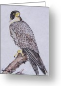 Eagle Drawings Greeting Cards - Hawk Greeting Card by Tammy Dunn