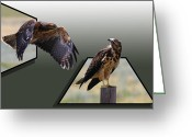 Out Of Frame Greeting Cards - Hawks Greeting Card by Shane Bechler