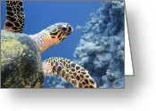 Hawksbill Turtle Greeting Cards - Hawksbill Turtle Greeting Card by Dimitris Neroulias
