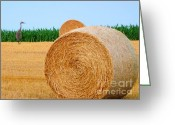 Cornfield Greeting Cards - Hay bale with Crane Greeting Card by Michael Garyet