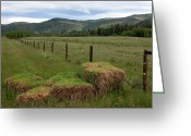 Alberta Foothills Landscape Greeting Cards - Hay bales Greeting Card by Stuart Turnbull