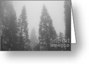 Biggest Tree Greeting Cards - Hazy Forest - black and white Greeting Card by Hideaki Sakurai