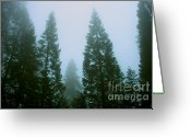 Biggest Tree Greeting Cards - Hazy Forest - green Greeting Card by Hideaki Sakurai