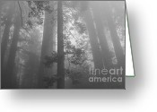 Biggest Tree Greeting Cards - Hazy Sequoia Forest - black and white Greeting Card by Hideaki Sakurai