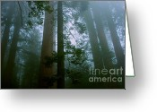 Biggest Tree Greeting Cards - Hazy Sequoia Forest - green Greeting Card by Hideaki Sakurai