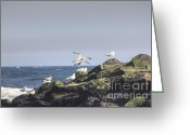 Boogie Board Greeting Cards - HDR Seagulls at Play Greeting Card by Pictures HDR