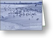 Boogie Board Greeting Cards - HDR Seagulls at Play in the Sand Greeting Card by Pictures HDR