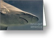 Surf Photos Art Greeting Cards - HDR Shark Ocean Sea Fish Wildlife Predator Photos Pictures Photography Buy Sell Selling Art Sealife  Greeting Card by Pictures HDR