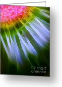 Morning Mist Images Greeting Cards - He Loves Me . . . Greeting Card by Judi Bagwell