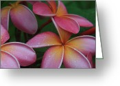 Tropical Gardens Greeting Cards - He Pua Laha Ole Aloha Hawaii Greeting Card by Sharon Mau