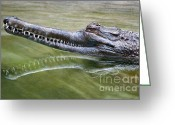 Sly Greeting Cards - Head Above Water Greeting Card by Dan Holm
