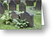 Occupy Photo Greeting Cards - Headstones and Ferns Greeting Card by Teresa Mucha