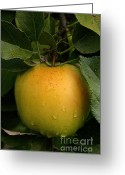 Ripened Fruit Greeting Cards - Healthy Glow Greeting Card by Susan Herber