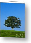 Planning Greeting Cards - Healthy Tree Greeting Card by John Greim